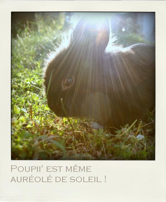 http://anicroche.cowblog.fr/images/IMG1594pola.jpg