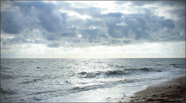 http://anicroche.cowblog.fr/images/Photos/merdargent.jpg