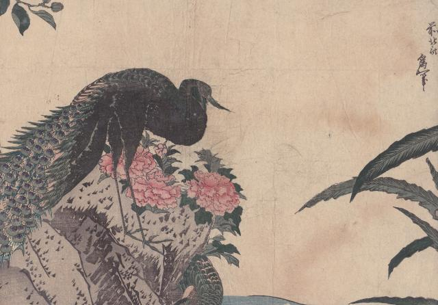 http://anicroche.cowblog.fr/images/div/HokusaiPaon1.jpg
