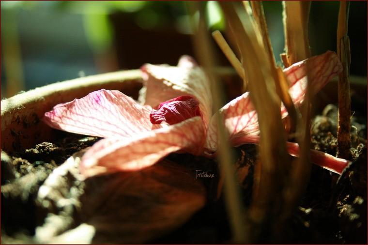 http://anicroche.cowblog.fr/images/fleurptt.jpg